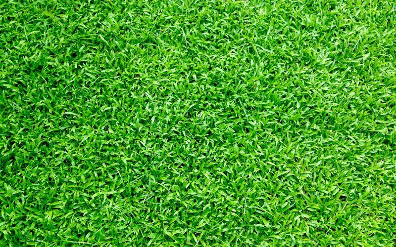 artificialgrass-header